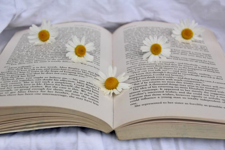 Book with Daisies Hero
